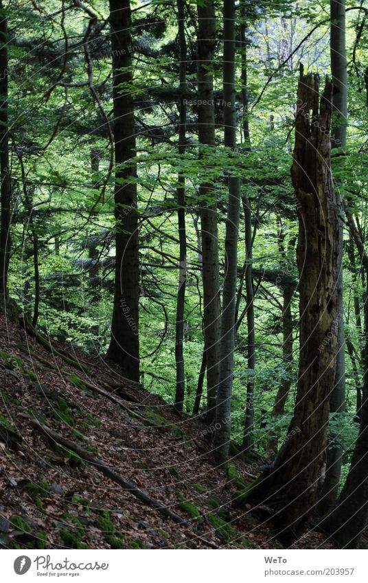 Nature Tree Plant Forest Death Landscape Environment Tree trunk Black Forest Tree stump Log Mixed forest