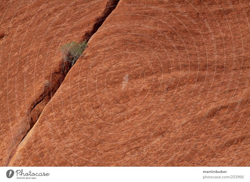 Uluru Nature Stone To dry up Exceptional Large Calm Purity Power Stagnating Australia Stone wall Red Bushes Column Tenacious Monolith Monochrome
