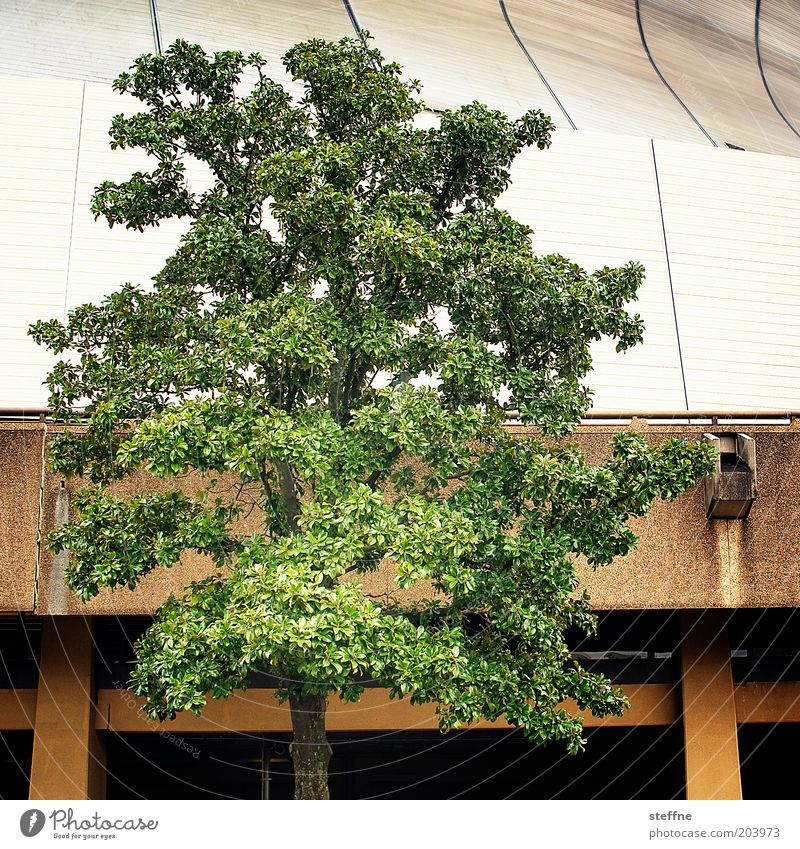 Nature Tree Plant House (Residential Structure) Hall Louisiana New Orleans