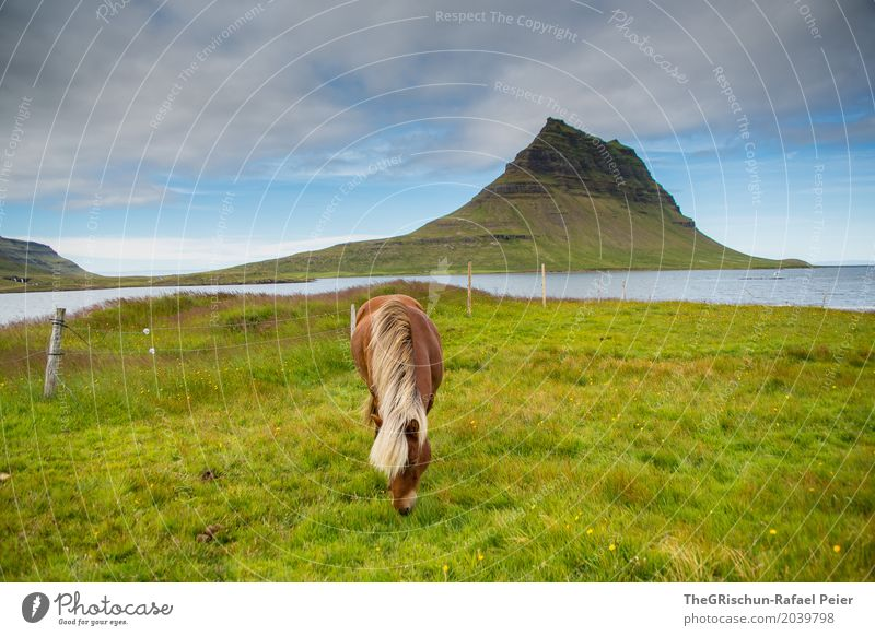 Horse & Mountain Environment Nature Landscape Blue Brown Gray Green Iceland Kirkjufell Vacation & Travel Attraction Meadow Pasture Icelander Mane To feed Ocean