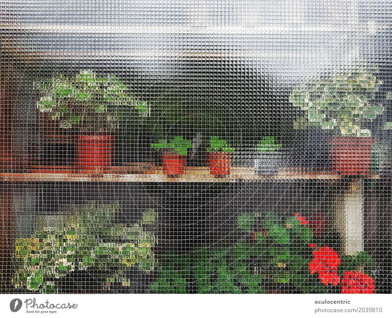 Anonymous Plants Flower Business Window Green Red Table Furniture Cupboard Glass Flowerpot Behind sunny Nice Beautiful double m Colour photo Deserted Light