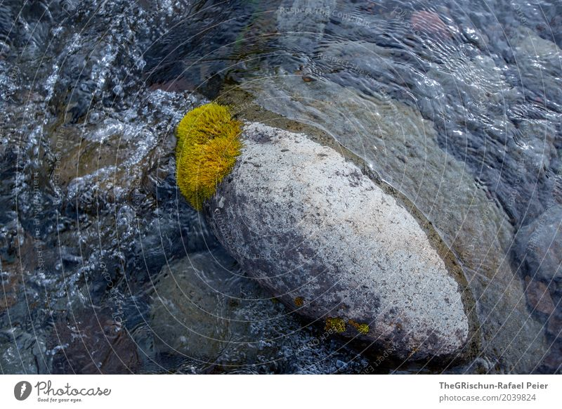 moss stone Nature Blue Gray Green White Stone Water Moss Structures and shapes Brook White crest Wet Colour photo Exterior shot Detail Deserted Copy Space top