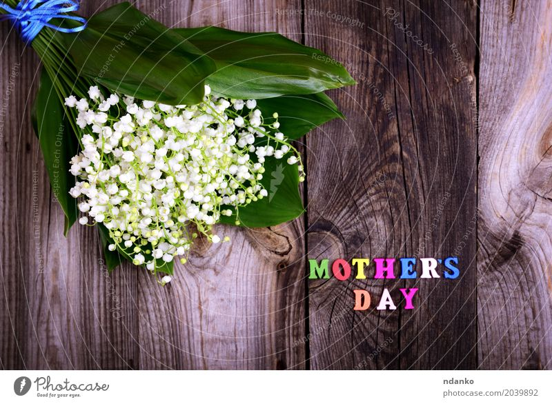 bouquet of white lilies of the valley Beautiful Mother's Day Plant Flower Bouquet Wood Blossoming Bright Small Multicoloured Gray White Happy Lily of the valley