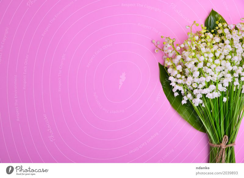 Bouquet of white lilies of the valley on a pink surface Beautiful Valentine's Day Mother's Day Wedding Birthday Plant Flower Bright Small Green Pink White