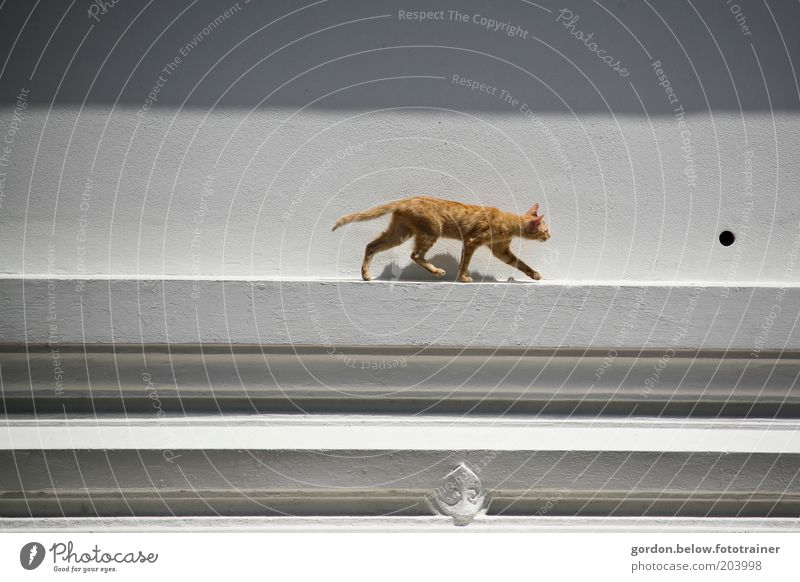 the cat on the roof Animal Pet Cat 1 Hunting Brown Colour photo Exterior shot Copy Space left Copy Space right Long shot Animal portrait Forward Creep