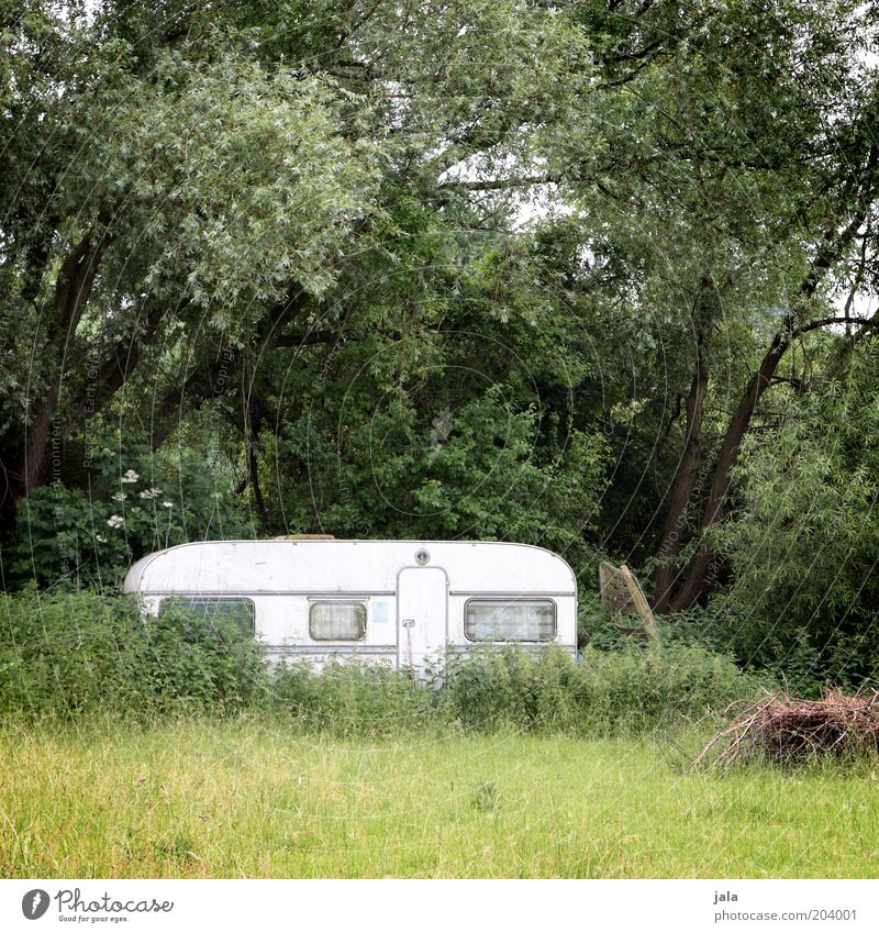 Nature White Tree Green Plant Loneliness Forest Meadow Grass Landscape Bushes Camping Remote Caravan Weekend Vacation & Travel