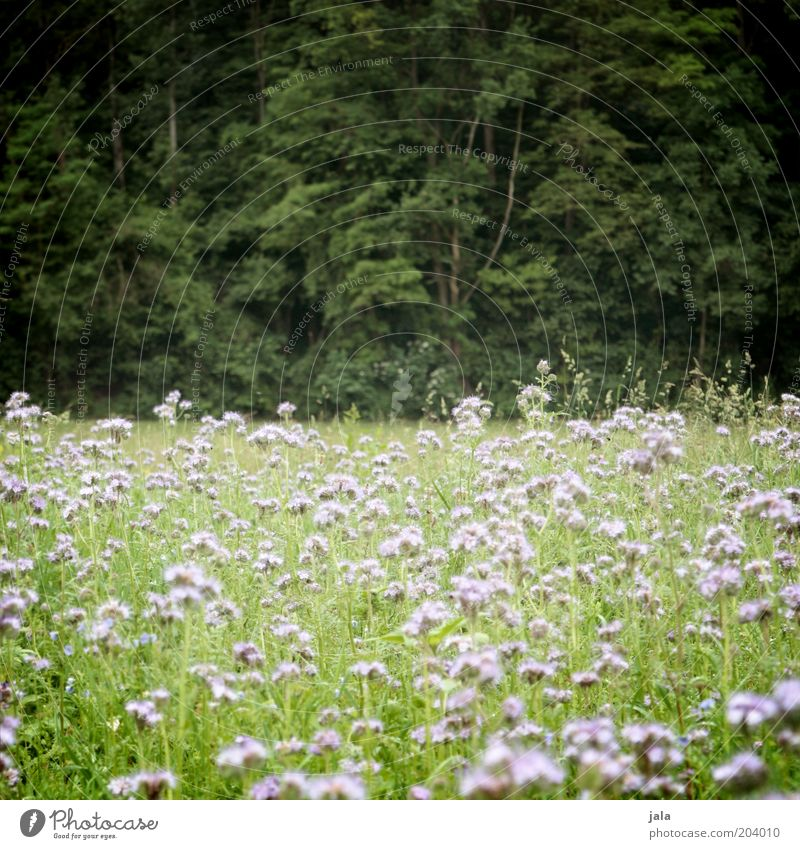 woodland meadow Nature Landscape Plant Tree Flower Grass Bushes Wild plant Meadow Forest Green Pink Flower meadow Colour photo Exterior shot Deserted Day