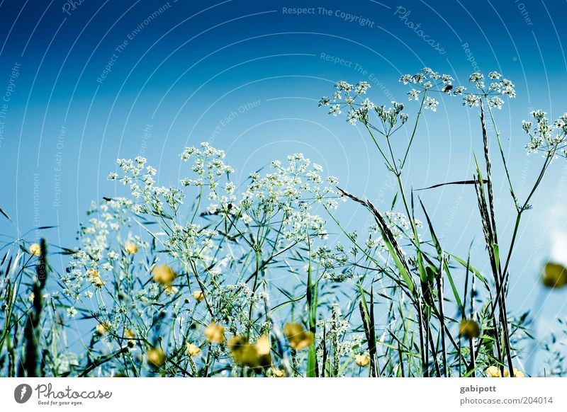 even more flower meadow Environment Nature Landscape Plant Sky Cloudless sky Spring Summer Climate Weather Beautiful weather Grass Blossom Foliage plant