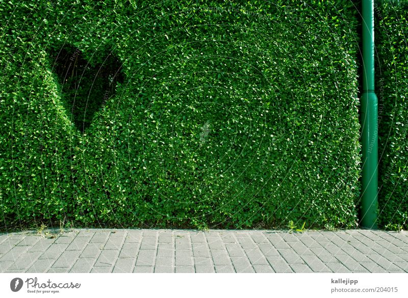 Plant Environment Happy Heart Design Sidewalk Environmental protection Infatuation Lanes & trails Hedge Foliage plant Contrast Imprint Lamp post Love of nature
