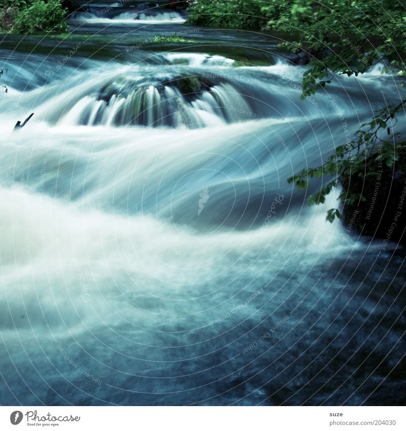Nature Blue Green Water Plant Landscape Environment Movement Natural Park Idyll Wild Fresh Wet Fantastic River