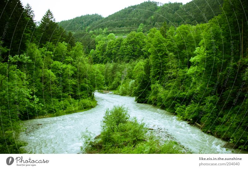 Water Beautiful Tree Green Plant Forest Island River Bushes Hill Virgin forest River bank Harmonious Flow Canyon Mountain