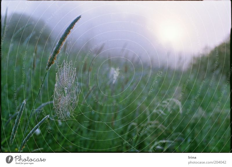 frenzy Drops of water Grass Meadow Spider's web Green Calm Dew Blade of grass Untouched Ethnic Exterior shot Dawn Shallow depth of field Deserted
