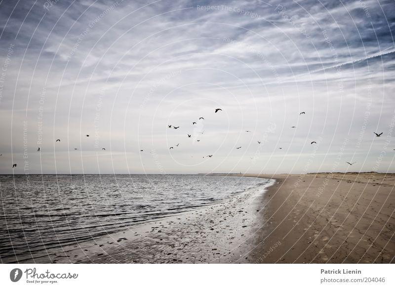 Nature Water Sky Ocean Summer Beach Calm Clouds Far-off places Dream Sand Landscape Air Bird Waves Coast