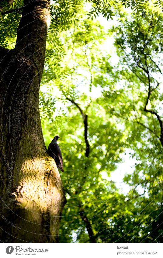 Nature Tree Green Plant Summer Leaf Animal Above Garden Warmth Bird Environment Tall Sit Growth Climate