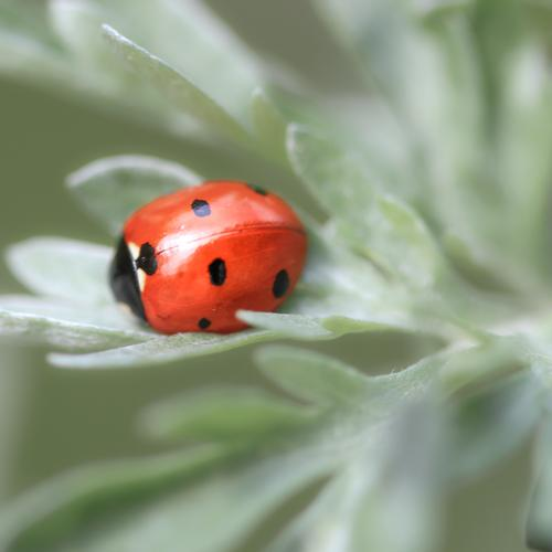 Nature Plant Animal Leaf Calm Environment Happy Gray Orange Symbols and metaphors Insect Positive Safety (feeling of) Beetle Ladybird Seven-spot ladybird