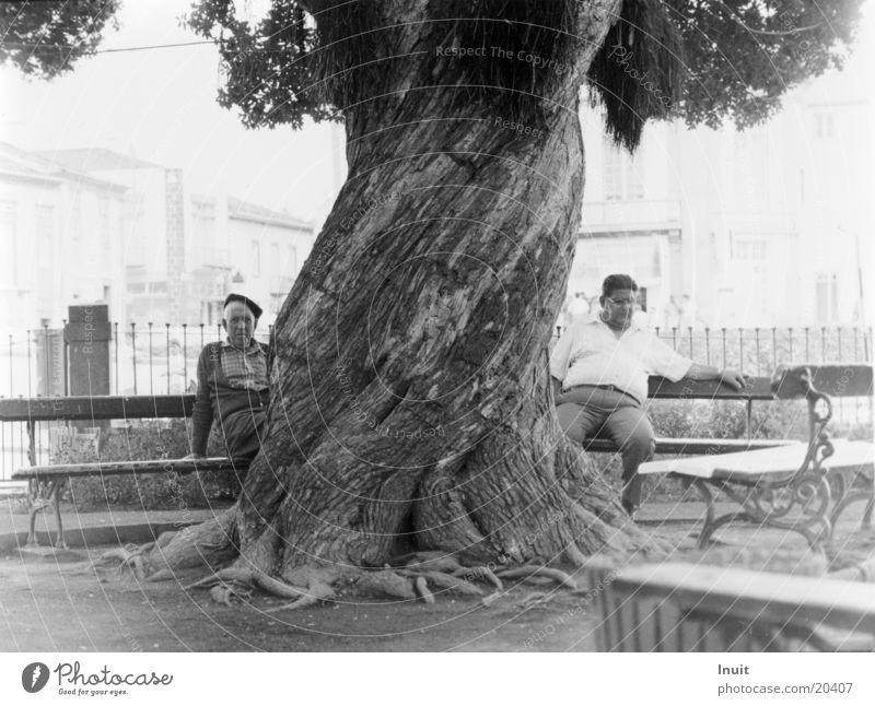 tree Man Calm Azores Midday Europe Old Bench