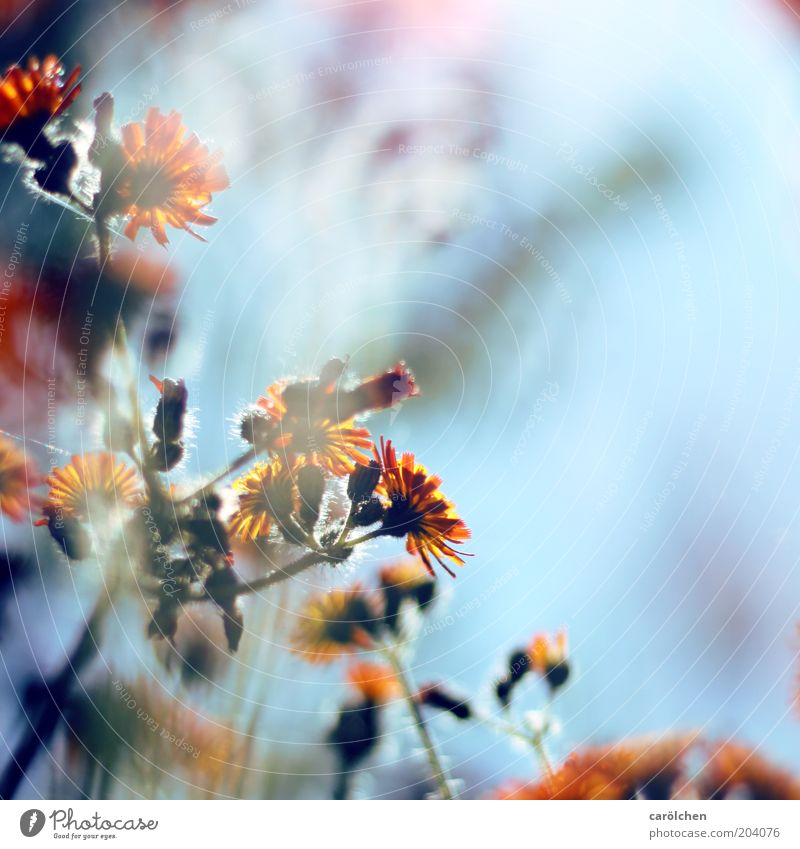 Nature Blue Plant Flower Summer Environment Blossom Spring Orange Delicate Stalk Flower stem