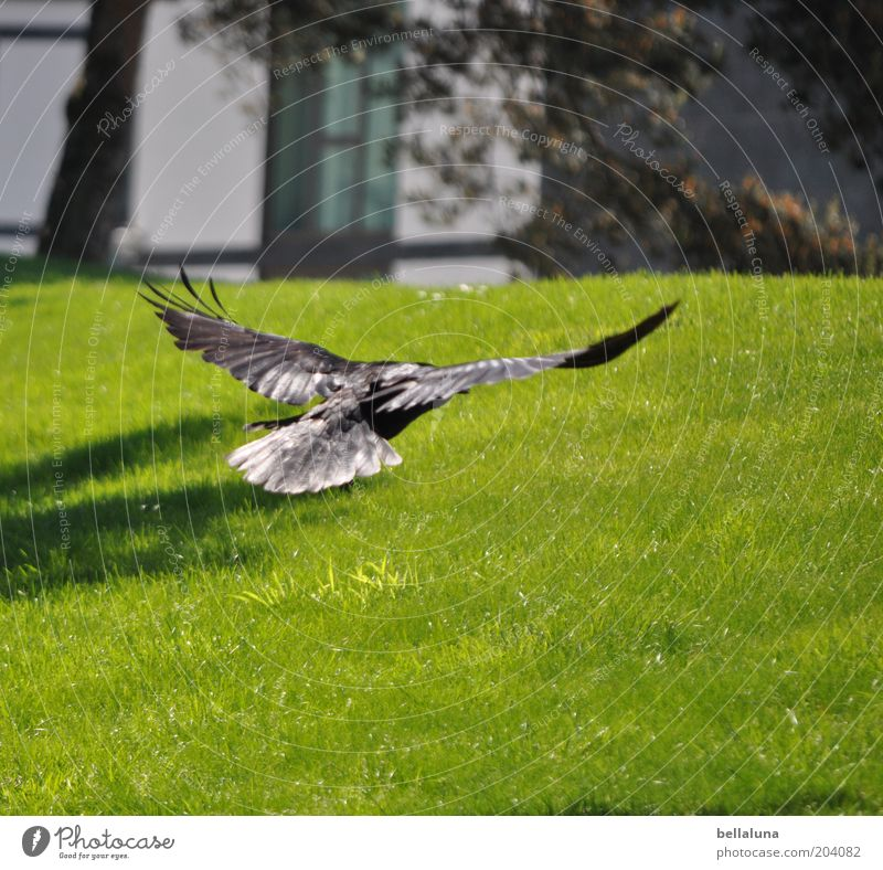 Nature Animal Meadow Environment Landscape Movement Garden Air Park Bird Flying Facade Wild animal Wing Lawn Hover