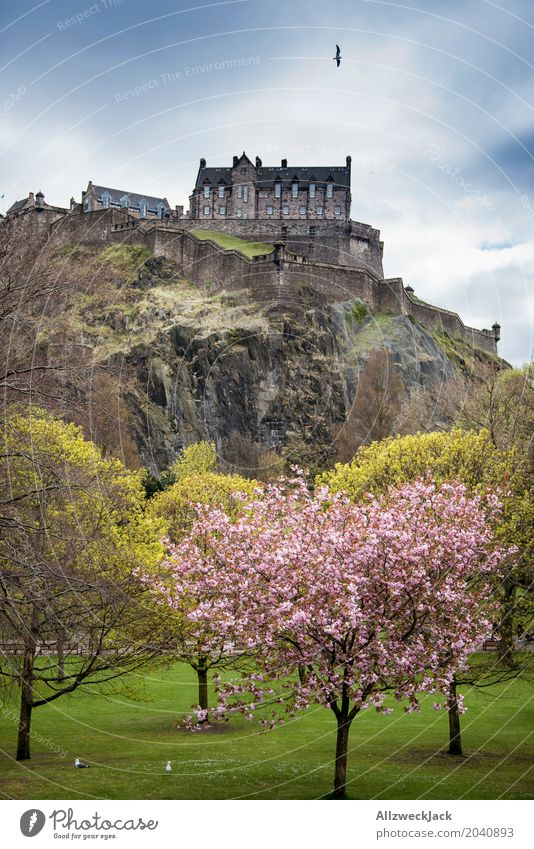 Edinburgh Castle Beautiful weather Tree Cherry blossom Cherry tree Rock Scotland Capital city Downtown Old town Tourist Attraction Landmark Monument Historic