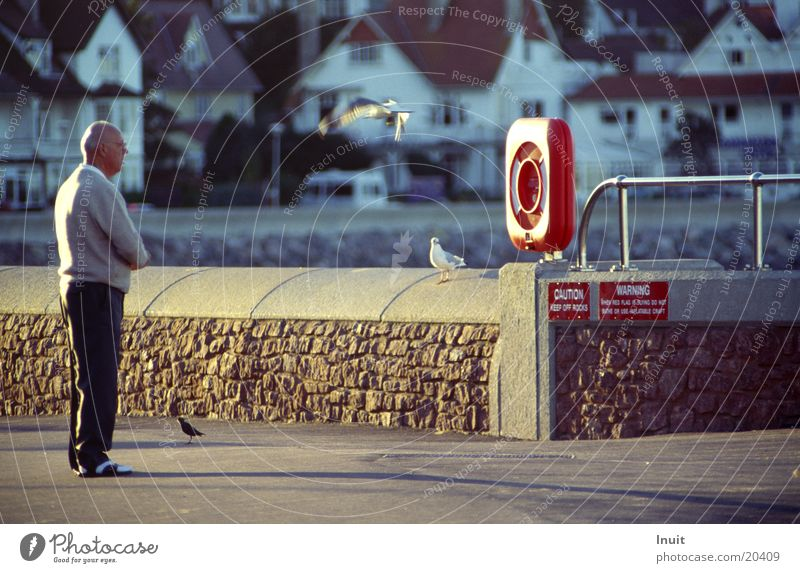 dialogue England Ocean Seagull Life belt Wall (barrier) Man