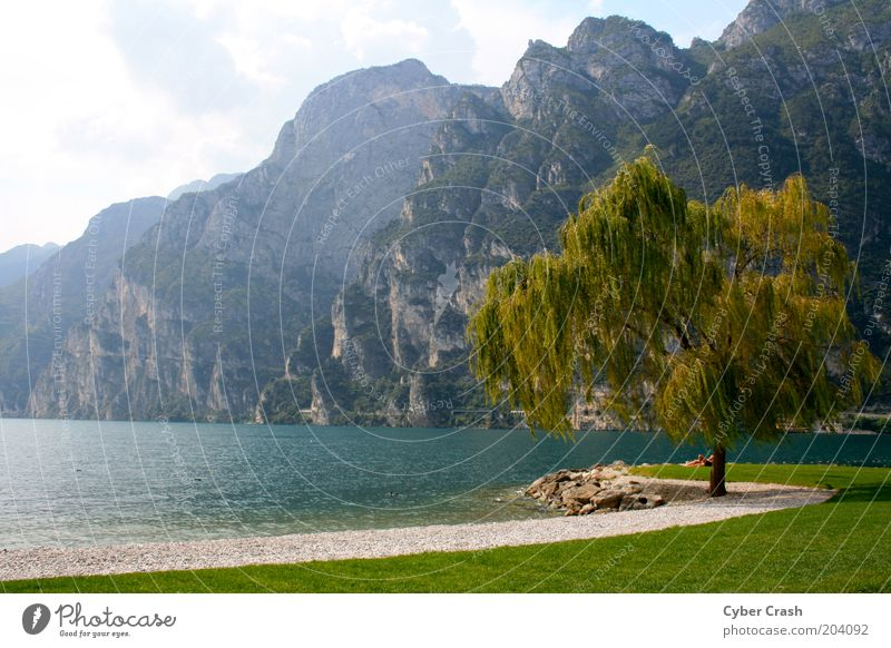 Impression Lake Garda Landscape Plant Water Summer Tree Mountain Lakeside Italy Europe Loneliness Idyll Colour photo Exterior shot Deserted Copy Space left Day