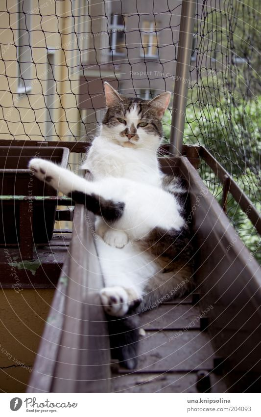 relax! Well-being Relaxation Calm Pet Cat 1 Animal Sleep Funny Domestic cat Sleeping place Window box Balcony Looking Colour photo Exterior shot Day