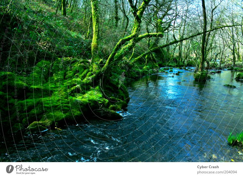 Galician Forests Nature Plant Water Tree Moss Wild plant River bank Brook Blue Green Esthetic Loneliness Colour photo Exterior shot Deserted Copy Space bottom