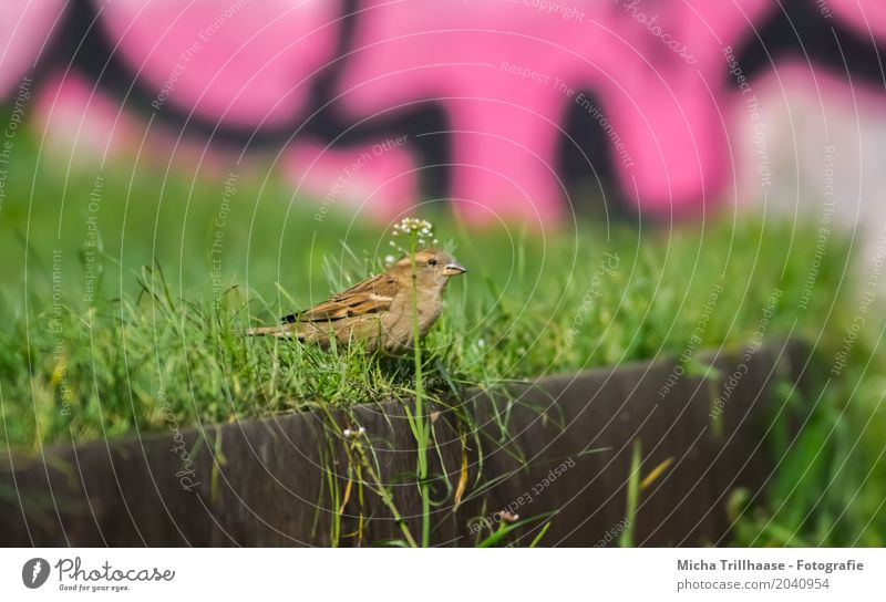 Sparrow and Graffiti Art Culture Youth culture Environment Nature Animal Sun Sunlight Beautiful weather Plant Grass Foliage plant Wall (barrier) Wall (building)