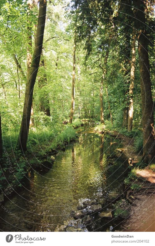Nature Water Beautiful Tree Green Plant Forest Grass Park Warmth Brown Environment River Beautiful weather Brook River bank