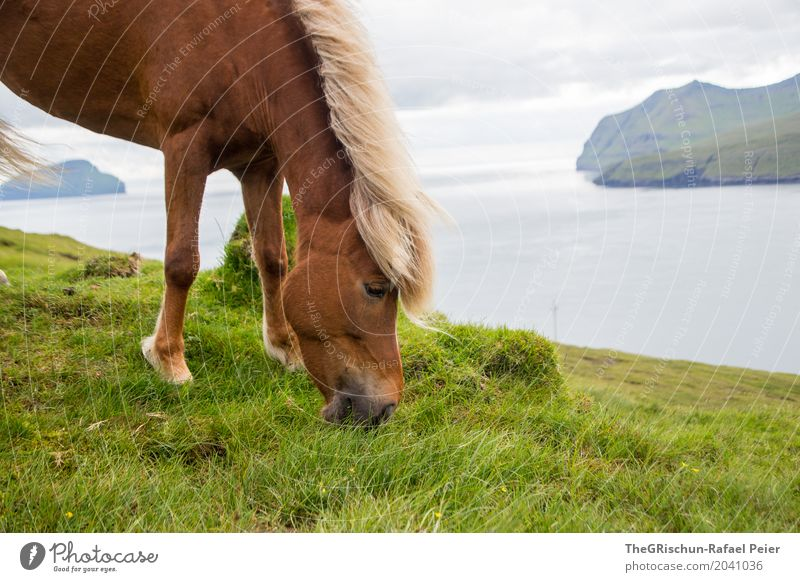 Icelanders II Environment Nature Landscape Blue Brown Gray Green Pasture To feed Føroyar Island Ocean Far-off places Horse Grass Food Mountain Mane Elegant Eyes