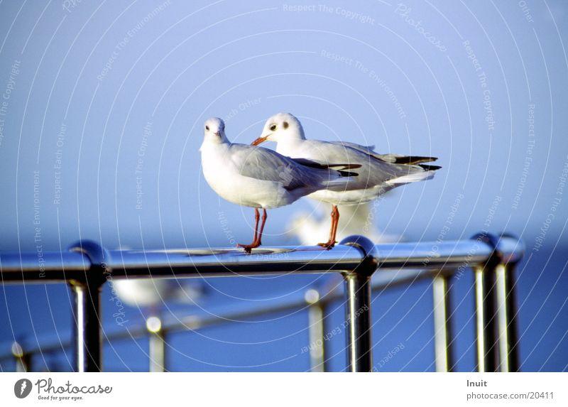 2 seagulls Bird Ocean Wanderlust England Transport Handrail In pairs Pair of animals