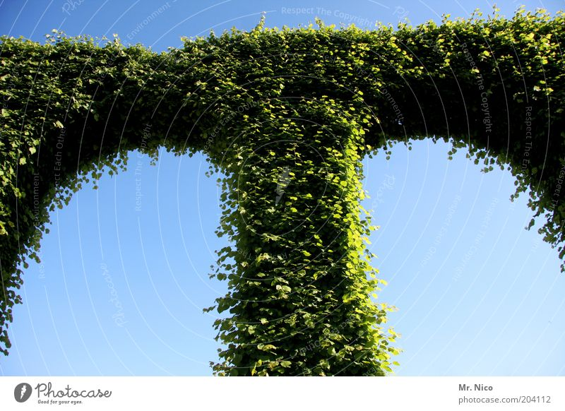 Green Plant Leaf Garden Park Crazy Growth Bushes Symbols and metaphors Column Hedge Horticulture Arch Ivy Curved Castle grounds