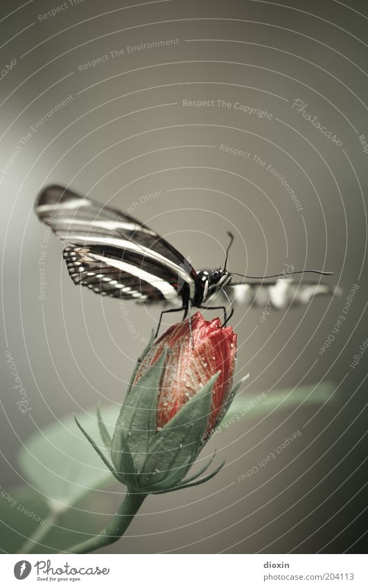 Nature Flower Plant Animal Blossom Small Sit Wing Insect Natural Butterfly To feed Exotic Bud Feeler Delicate
