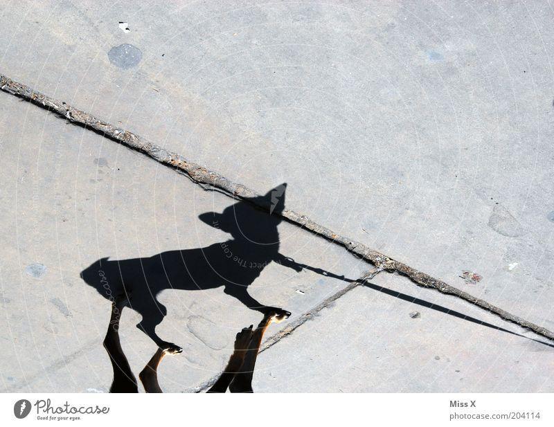 Animal Street Dog Funny Small Sidewalk Lanes & trails Walk the dog