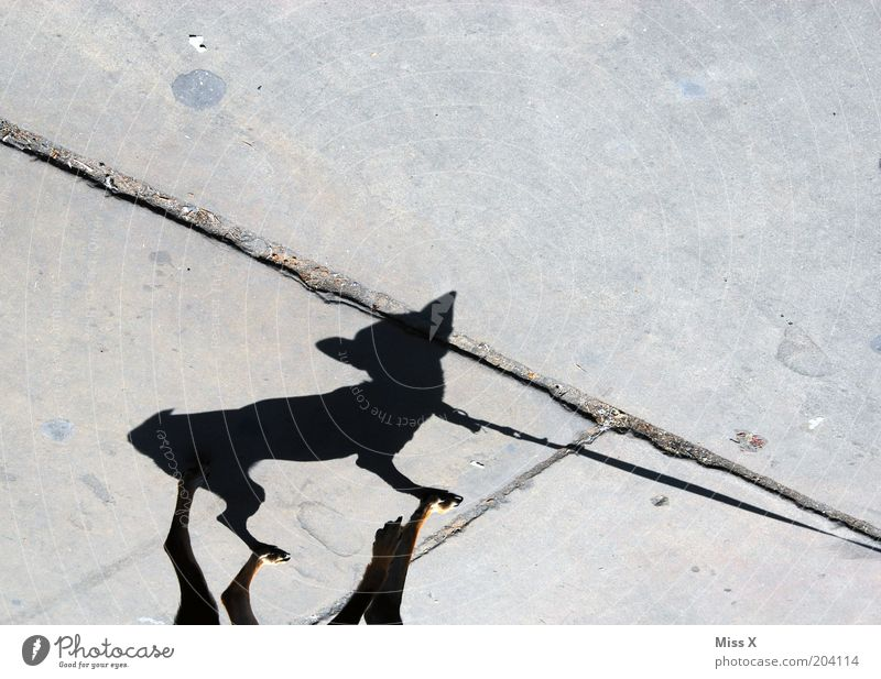 Tinkerbell Street Animal Dog 1 Small Funny Walk the dog Sidewalk Colour photo Subdued colour Exterior shot Deserted Copy Space top Shadow Silhouette Sunlight