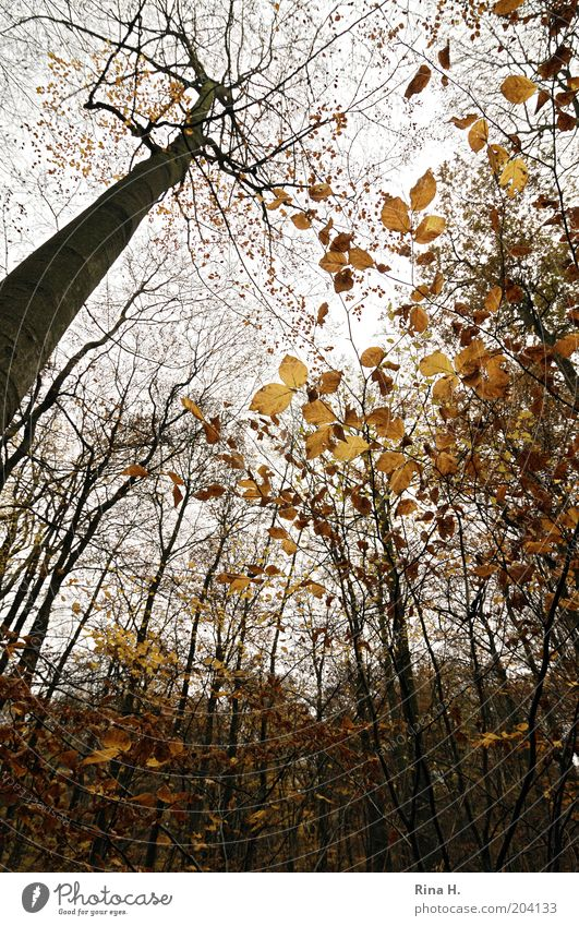 high up Environment Nature Landscape Sky Autumn Tree Forest Natural Wild Leaf Colour photo Deserted Deep depth of field Autumn leaves Deciduous tree
