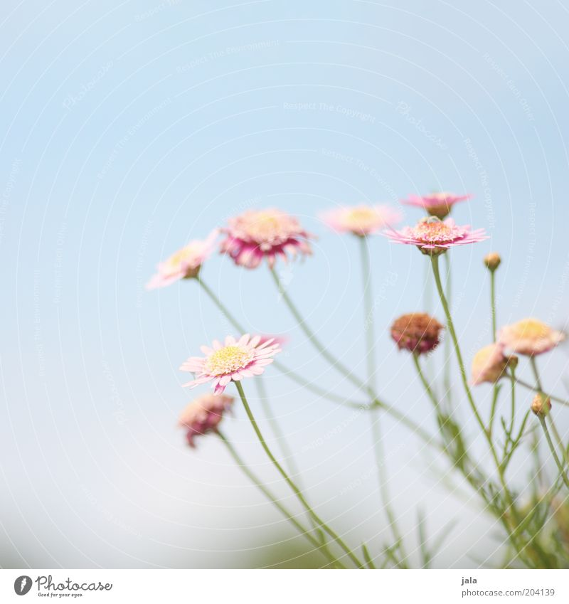 little flowers Nature Plant Flower Beautiful Blue Pink Colour photo Exterior shot Deserted Copy Space top Day Blossoming Sky Blossom leave