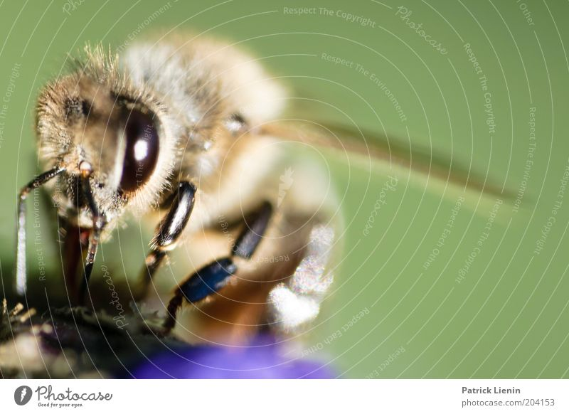 Look me in the eye. Nature Plant Animal Sun Summer Flower Garden Park Meadow Work and employment Bee Looking Wing Green Large Feeler Nutrition Alarming Fear