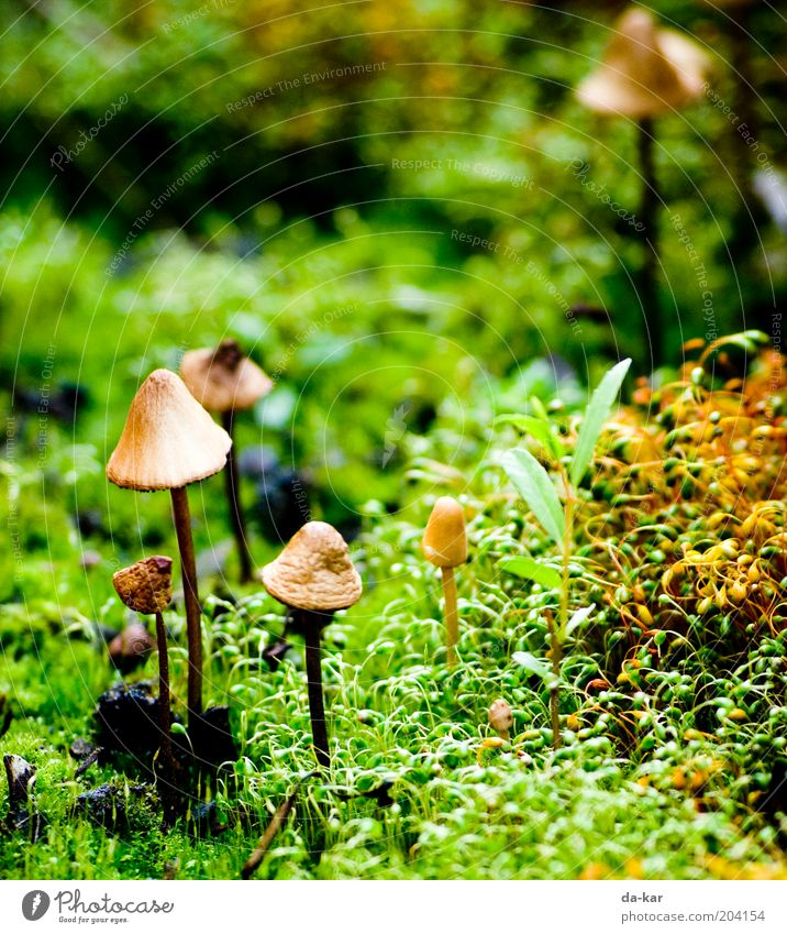 A little man stands in the ... Nature Plant Moss Small Near Under Brown Green Mushroom Colour photo Exterior shot Close-up Detail Deserted Copy Space top Day