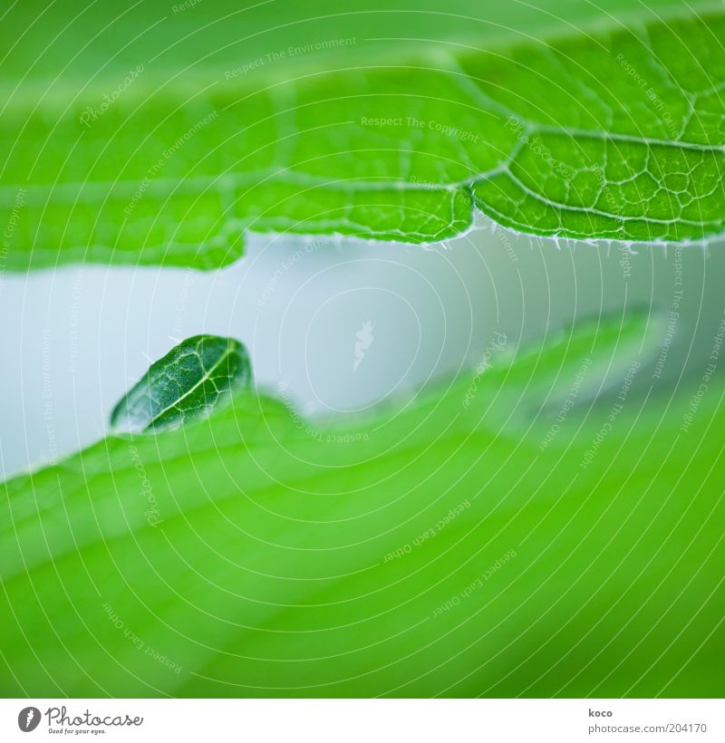 small but oho! Plant Spring Summer Leaf Foliage plant Growth Small Green Life Environment Colour photo Macro (Extreme close-up) Deserted Day
