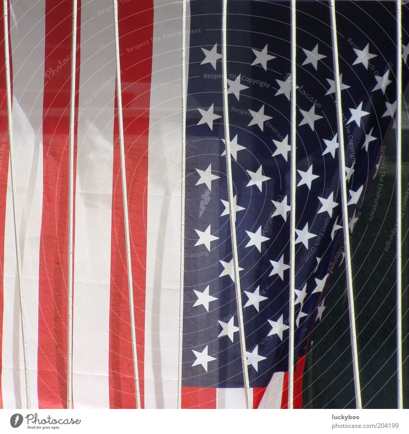 Blue White Red Colour Star (Symbol) Stripe Might USA Decoration Transience Flag Sign Society Grating Captured American Flag