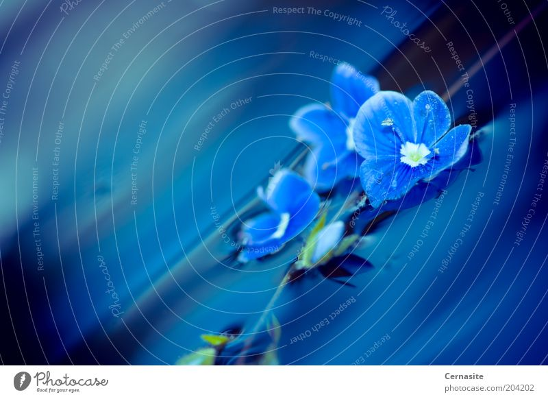 Blue Nature Water Blue Plant Sun Summer Flower Dark Emotions Garden Moody Waves Exceptional Esthetic Simple Bad weather