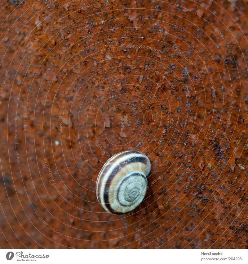 Calm Loneliness Brown Metal Esthetic Rust Snail Stick Light Snail shell
