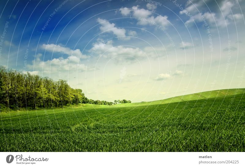 Sky Nature Blue Green Landscape Clouds Forest Spring Field Beautiful weather Agriculture Grain field Wide angle