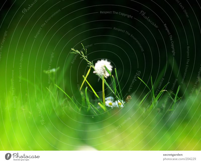 Nature White Green Plant Summer Black Loneliness Meadow Grass Spring Environment Uniqueness Middle Dandelion Flower Center point