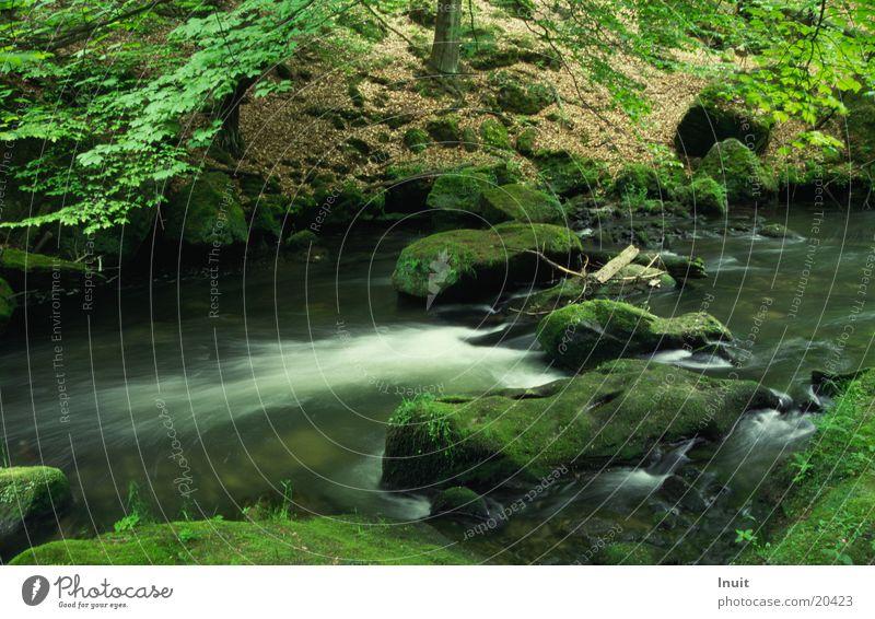 Water Brook Green River Stone Rock Edmundsklamm Kamenice