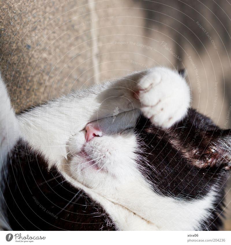 White Calm Black Animal Cat Contentment Sleep Protection Pelt Warm-heartedness Serene Sunbathing Vacation & Travel Paw Safety (feeling of) Pet