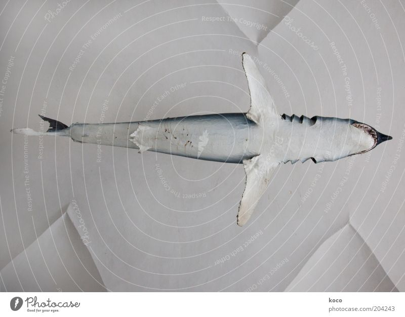 high fish Fish Ocean Water Dead animal Shark 1 Animal Flying Esthetic Exceptional Threat Above Blue Black White Power Subdued colour Deserted Day
