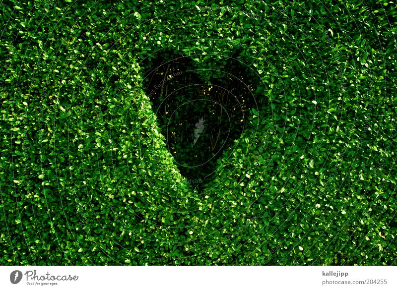 nature lover Environment Nature Plant Climate Climate change Leaf Foliage plant Sign Heart Sustainability Design Environmental protection Green Box tree Hedge