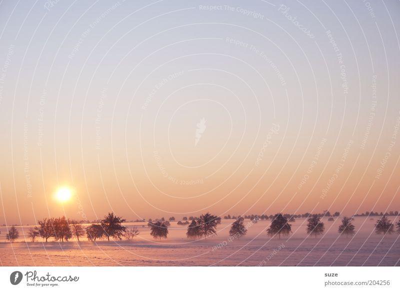 Sky Nature Tree Sun Loneliness Winter Landscape Environment Cold Snow Horizon Exceptional Field Climate Fog Esthetic